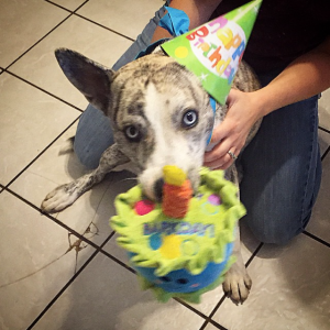 Adobe's birthday party